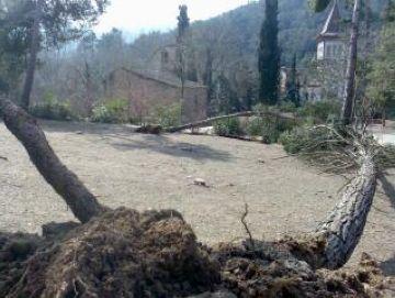 Els arbres caiguts per la nevada encara dificulten el pas pels camins de Collserola