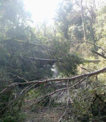 Collserola encara té zones inaccessibles, mig any després de la nevada