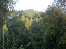 L'entitat espera que la Generalitat acceleri el projecte per declarar Collserola Parc Natural