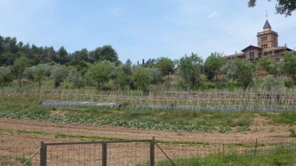 La cooperativa l'Ortiga manté l'explotació de la finca de Can Monmany de Valldoreix