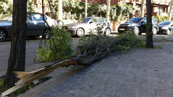 El vent provoca algunes caigudes de branques