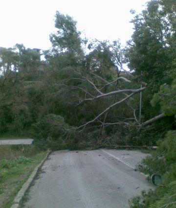 El Mussol assegura que molts arbres van caure, també, per culpa de l'acció humana