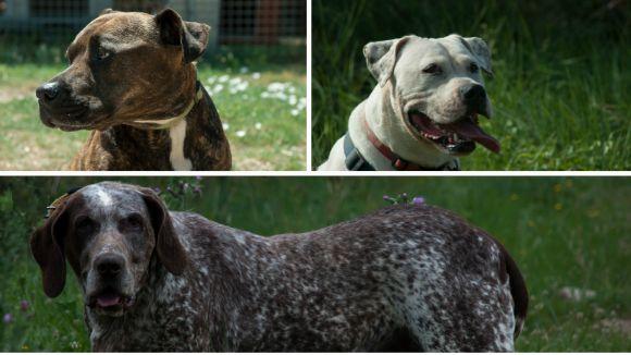 Cau Amic participa en un concert solidari a benefici dels animals