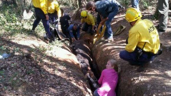 La Policia Local i l'ADF col·laboren en el rescat d'un cavall atrapat