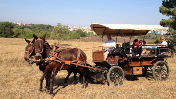 L'Hípica Can Caldés ofereix tombs en carruatge per Collserola