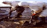 Dos voluntaris treballant en una de les platges afectades per la marea negra provocada pel petrolier 'Prestige'