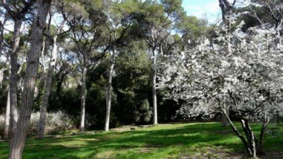 El Parc de Collserola acollirà diverses excursions / Foto: Parc de Collserola