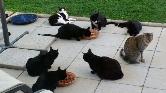 Gats que formen part de la colònia / Foto: Cau Amic