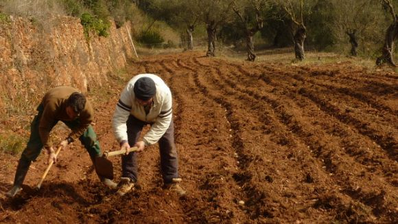 L'Ortiga ofereix sostenibilitat a l'hort i al plat