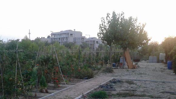 La uaSC demana enfortir la funció social dels horts urbans