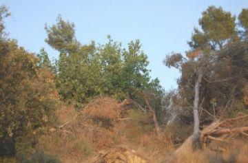 Salvem del Foc Collserola, nova plataforma ciutadana per netejar Collserola d'arbres caiguts a la ventada