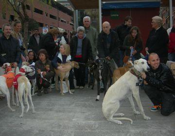 Gossos llebrers i de caça consciencien Sant Cugat de la seva problemàtica