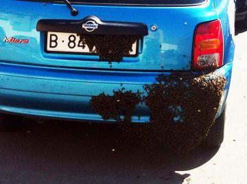 Un eixam volàtil cobreix part d'un cotxe a la carretera de Cerdanyola