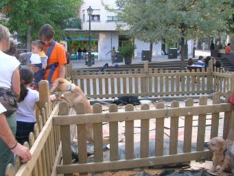 L'estand municipal d'adopció de gossos i gats torna a la plaça d'Octavià aquest cap de setmana