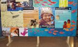 La msotra es pot visitar a la Casa de Cultura fins el pròxim 17 de novembre