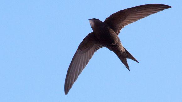 L'Ajuntament atribueix als veïns la instal·lació de la xarxa que va causar la mort a quatre aus