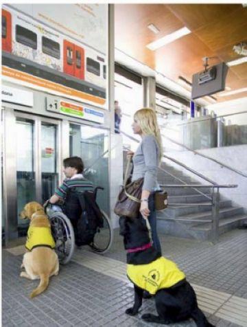 Sant Cugat acull un curs de formació de gossos d'assistència