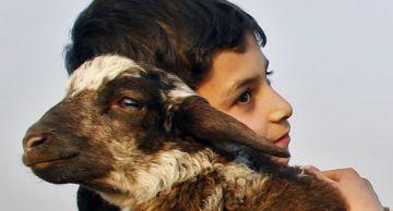 La festa del xai commemora el sacrifici del profeta Abraham / Font: 3cat24