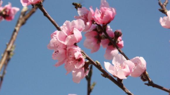 Es preveu una primavera poc complicada per als al·lèrgics
