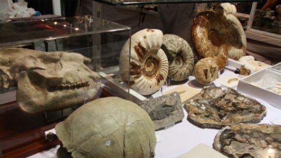 'Els organismes fòssils i la vida a la Terra', avui al Museu del Monestir