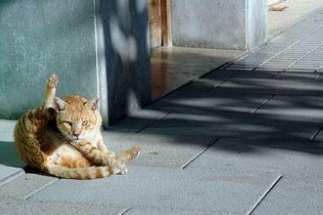 L'Associació Veïnal Centre Estació busca millorar la qualitat de vida de la colònia de gats de la plaça dels Pous