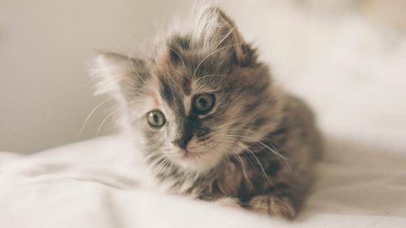 Taller: 'Pautes per a un gat feliç'