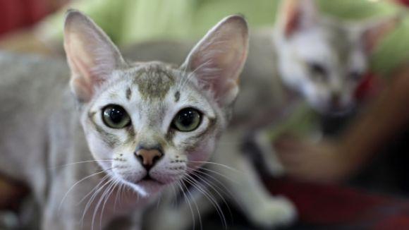 La plataforma està creant un cens de colònies de gats / Foto: ACN
