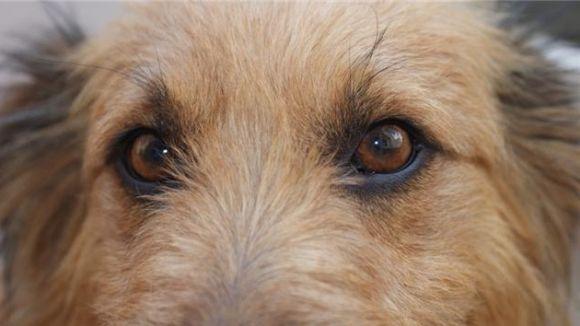 El Cau Amic ha recollit una desena de gossos des de principi d'any