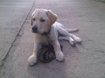 L'Ajuntament multa 20 propietaris de gossos per incompliment de la normativa