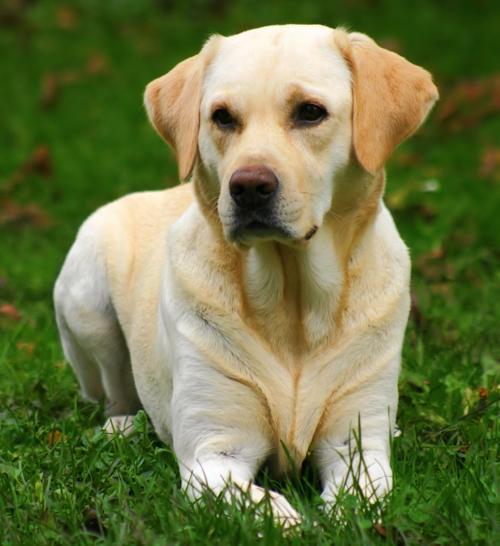 El Fòrum Bayer alerta de la leishmaniosis canina, una malaltia que predomina a la nostra comarca