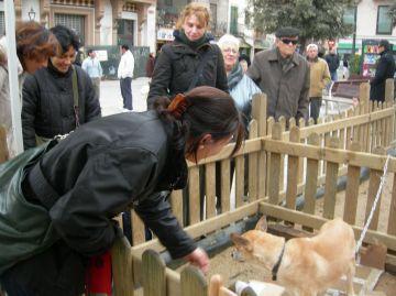 L'estand d'adopció de gossos fa una crida a la responsabilitat amb els animals