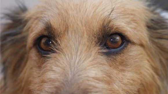 La uaSC demana subvencions per a la protectora d'animals Cau Amic