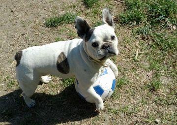 Ofereixen 2.500 euros per a qui trobi una gossa perduda a Mira-sol
