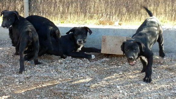 Xifra rècord d'adopcions de gossos a Cau Amic, però creix l'abandonament de gats