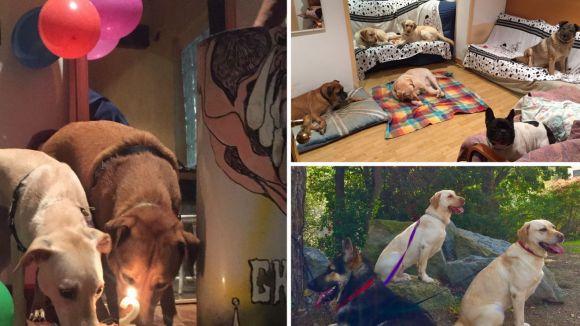 Així viuen els gossos el sevei de guarderia a una casa de les Planes