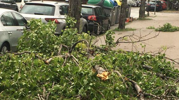 Arbres i branques caiguts, principals incidències per la pluja i el vent a Sant Cugat