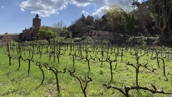 El vi reneix a Sant Cugat