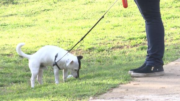 L'Ajuntament descarta fer tests a excrements de gos no recollits per detectar els infractors