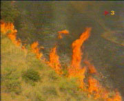 Incendi a La Floresta, l'any 1994 (cedida TV3)