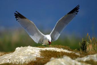 El Club Muntanyenc acollirà un cicle sobre globalització i medi ambient