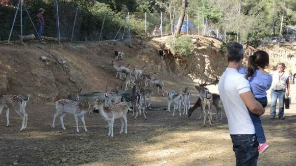 L'antic nucli zoològic de Cal Castillo