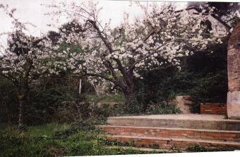 Els okupes havien recuperat l'ús de diversos horts de la casa