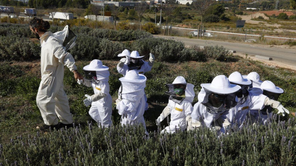 Melvida, conjuntament amb altres entitats, organitza diverses activitats per conscienciar sobre la importància de les abelles / Foto: Melvida