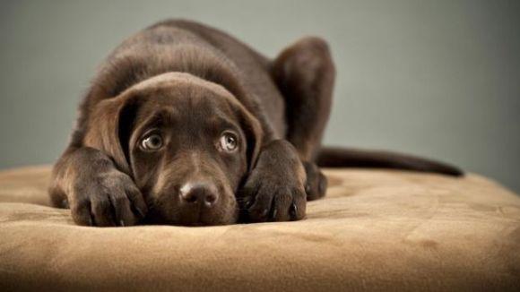 No s'ha de castigar l'animal quan té por