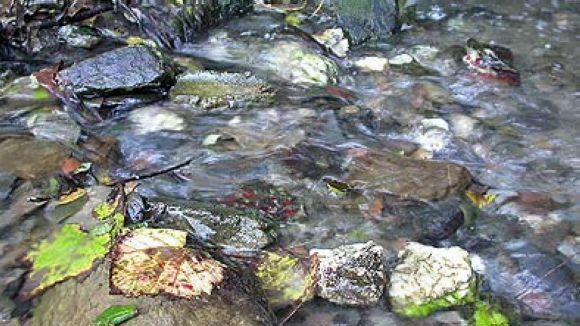 La moció també té l'objectiu de tenir cura del medi ambient / Foto: El Mussol
