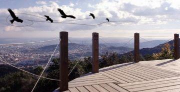 Collserola celebra avui el Dia Mundial dels Ocells