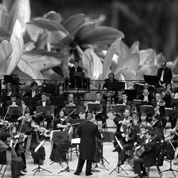 La sarsuela torna al Teatre-Auditori amb 'La rosa del azafrán'