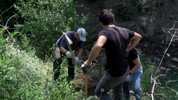 Voluntaris netegen d'espècies invasores l'entorn del pantà de Can Borrell