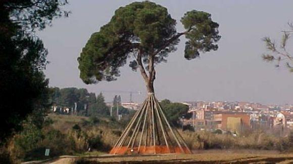Sant Cugat aportarà terra del Pi d'en Xandri al roure del Tricentenari
