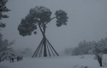 El Pi d'en Xandri nevat / Font: Bernat Picornell